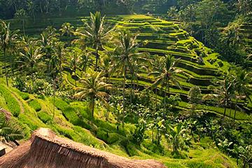 Costa Rica Vakantie