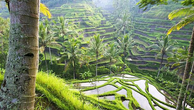 Subak Rijstvelden op UNESCO Werelderfgoedlijst